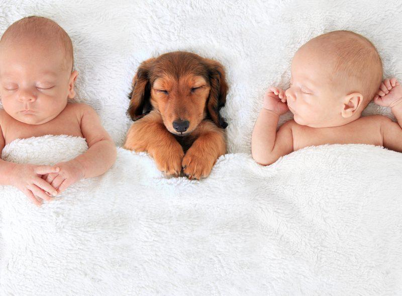 Animais e bebês podem conviver com benefícios, diz pesquisa