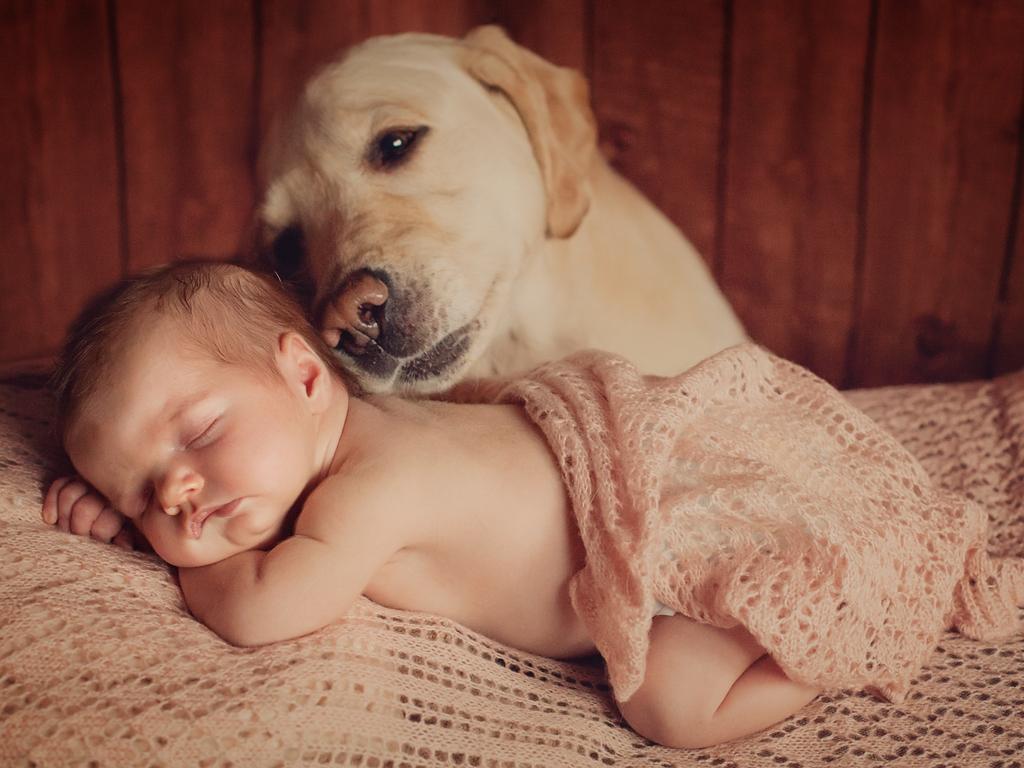 Preparar o pet par a chegada do bebê