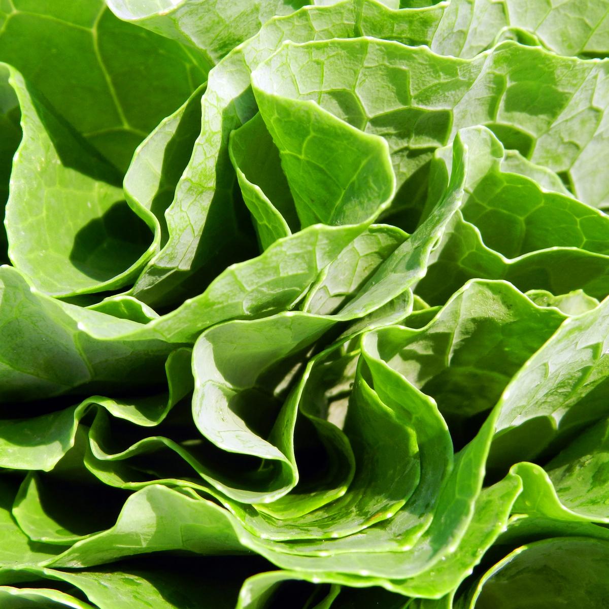 Vegetais verdes são fontes de ácido fólico