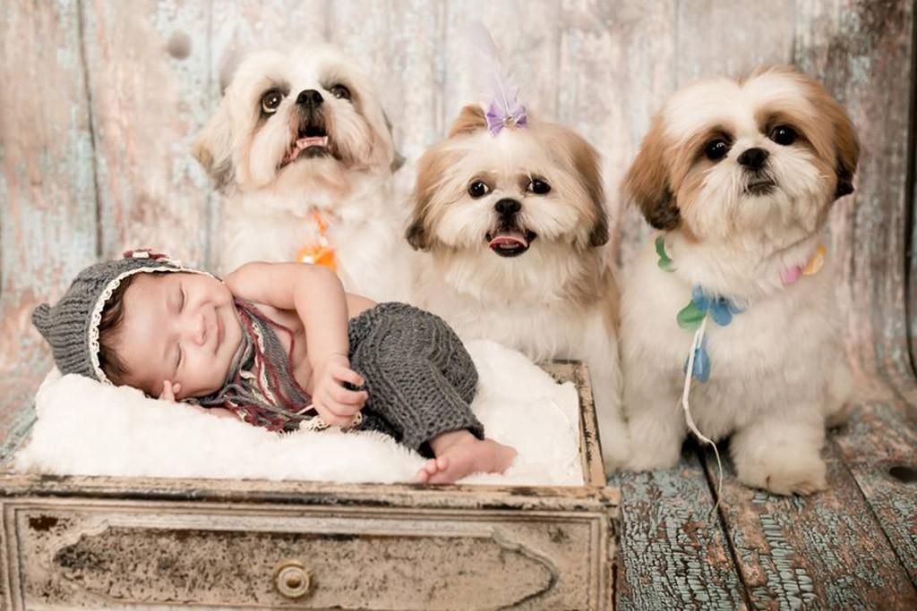 fotos de bebês com cachorros