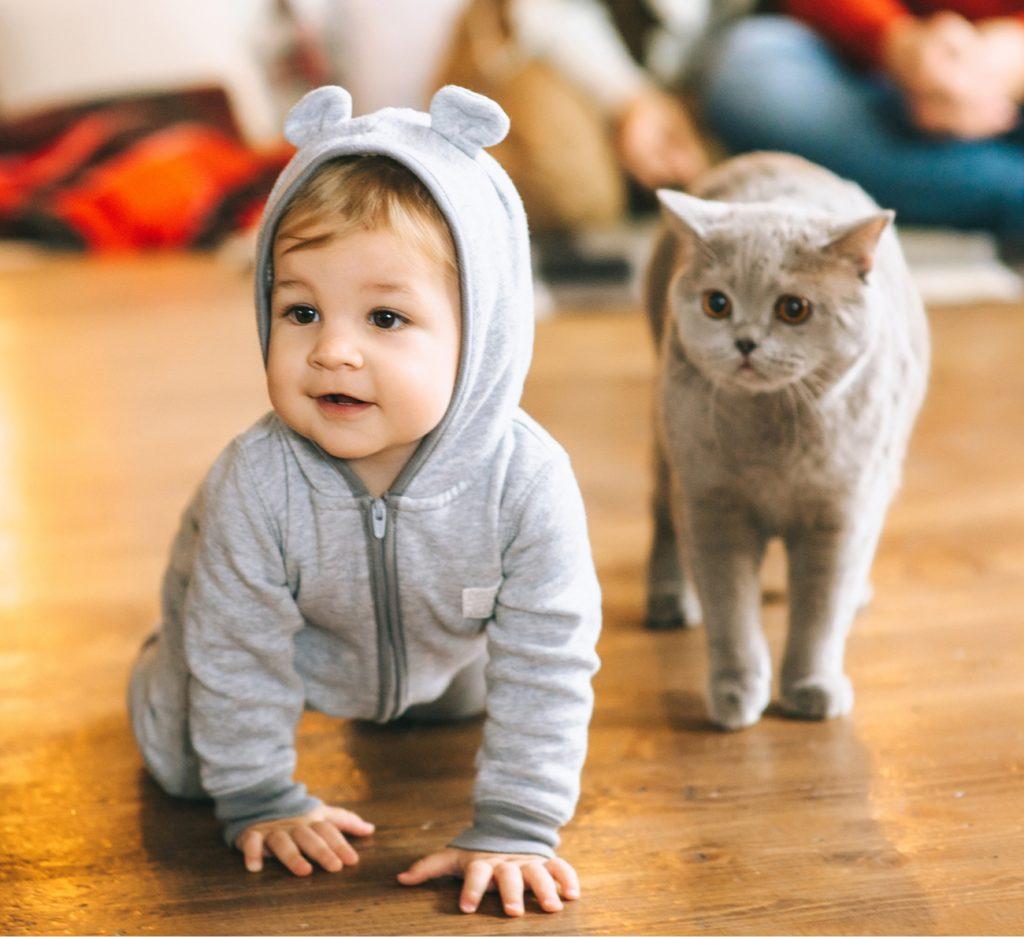 grávidas, bebês e gatos