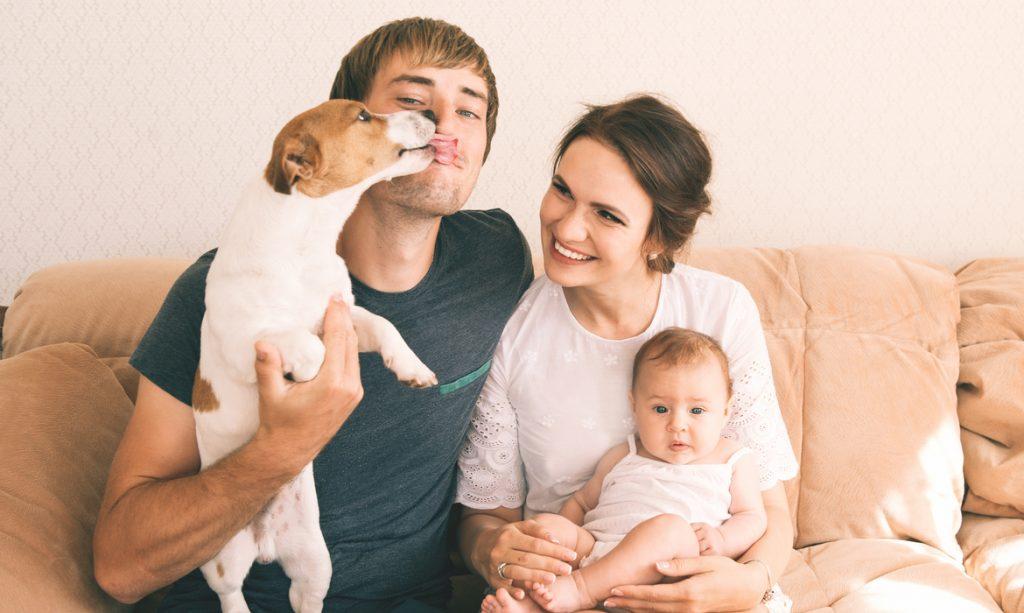 bebês e cachorros