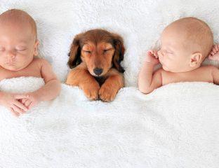 bebês e animais